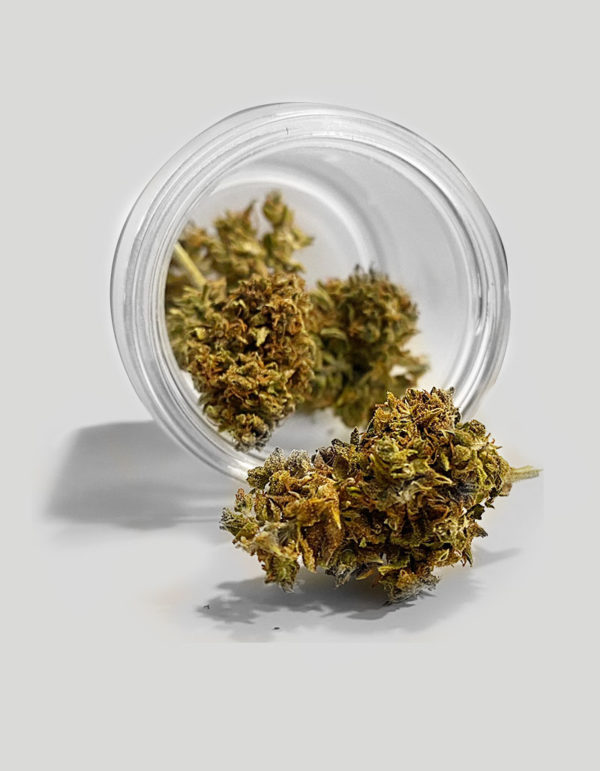 Image of green widow flower in a jar